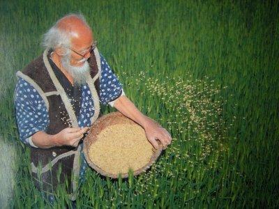 Dall'agricoltura che distrugge la natura a quella del non fare: il grande insegnamento di Fukuoka