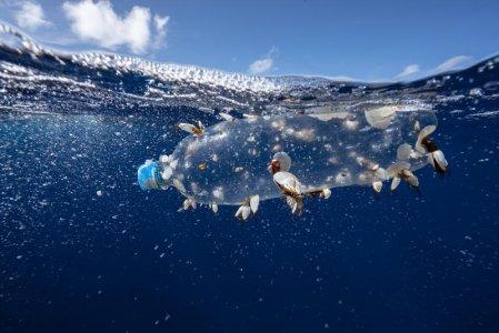«Ecco come proteggere un terzo degli oceani del pianeta entro il 2030»