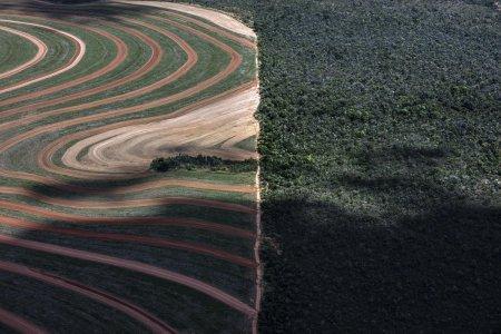 La produzione industriale di materie prime agricole si mangia le foreste del Pianeta