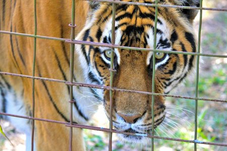 Fuori gli animali da circhi e zoo, riportiamoli a casa loro