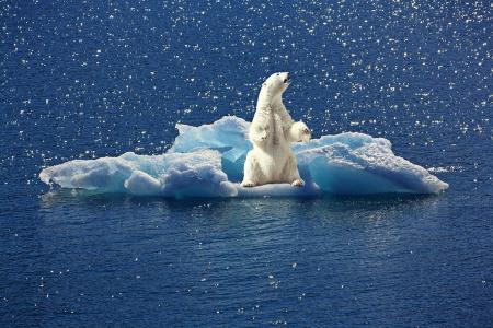 I Fridays for Future Italia: «Vogliamo il governo del cambiamento climatico!»