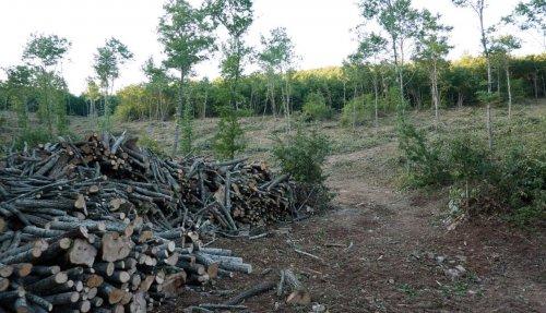 La petizione: «Salviamo i boschi dal saccheggio»