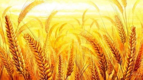 Greepeace: «Per evitare altre pandemie stop ai sussidi per l'agricoltura intensiva, sostegno per agricoltura su piccola scala»
