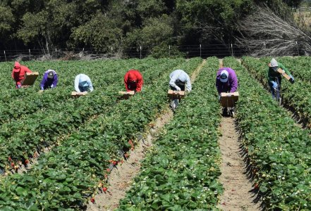 Assorurale: «In sostegno dei contadini e dei braccianti, per un'agricoltura dei diritti»