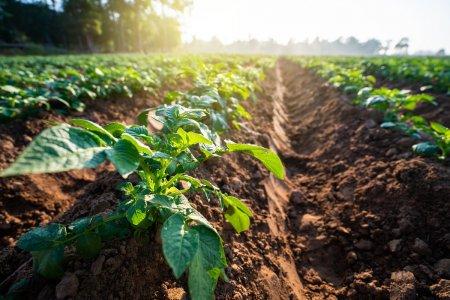 L'Associazione Rurale Italiana: «Dal coronavirus all'agroecologia contadina»