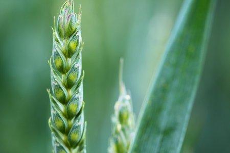 «Consiglio UE, Italia si batta per transizione ecologica dell'agricoltura»