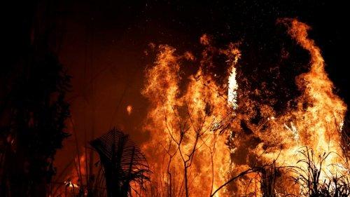 Amazzonia brasiliana: boom di incendi, anche nelle riserve naturali protette
