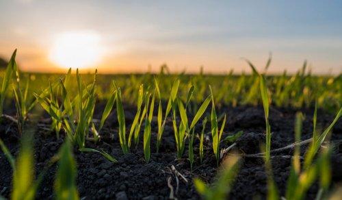 L'azienda agricola che lancia il concorso per ....