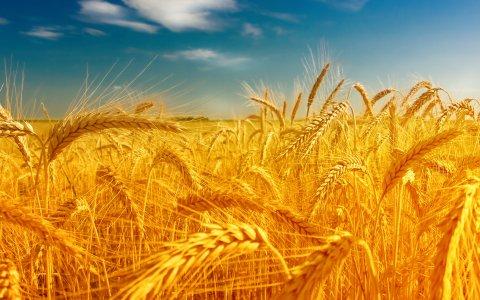ARI: «L'Italia recepisca la Dichiarazione dell'Onu sui diritti dei contadini»