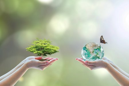 Greenpeace: «Nel PNRR assente la tutela della biodiversità»