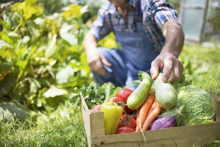 I tre pilastri dell'agricoltura di domani: autoconsumo, scambio e vendita delle eccedenze