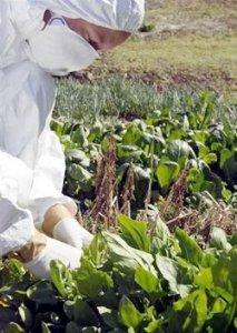 L'Europa e il dilemma della contaminazione del cibo