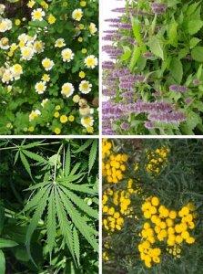 Biodiversità: un quinto delle piante rischia l'estinzione dall'Uk un rapporto