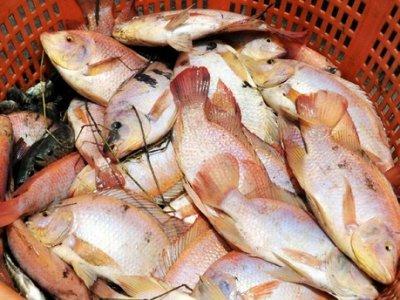 Fish Dependence: l'Italia ha già mangiato tutto il suo pesce