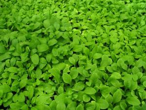 Il mito dei lavori 'green'