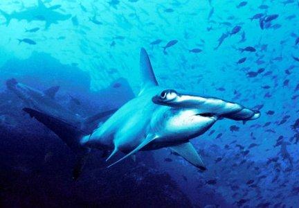 Costa Rica: istituita un'enorme riserva marina protetta