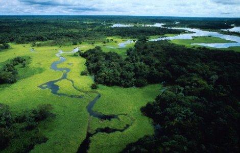Brasile: contro la deforestazione, l'Amazzonia protetta per legge
