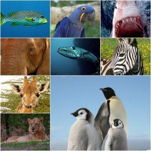 Nel 2050 una perdita di biodiversità pari al 7% del Pil globale