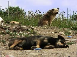 Cani randagi, in Romania stop momentaneo allo sterminio di massa