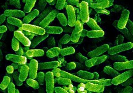 Batterio killer: germogli assassini o armi biologiche nei nostri piatti?