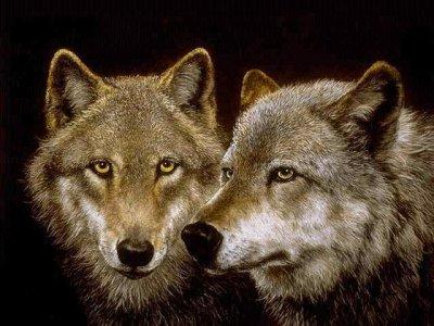 Sparare ai lupi per proteggere le greggi non è la soluzione