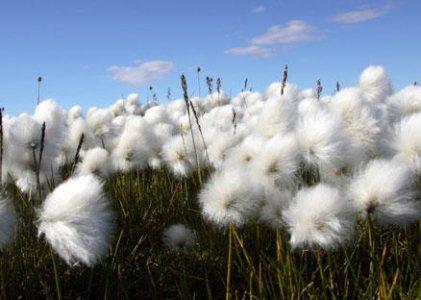 Il cotone biologico? In Africa significa cambiamento culturale e sociale