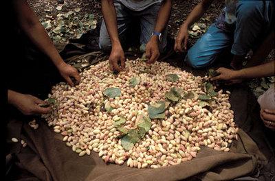 Indigenous Terra Madre 2011