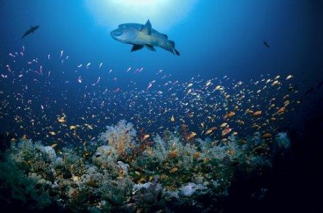 Oceani: esiste il rischio estinzione di massa per le specie marine
