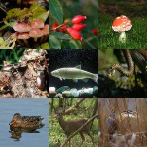Notizia storica: adottata una strategia per la biodiversità