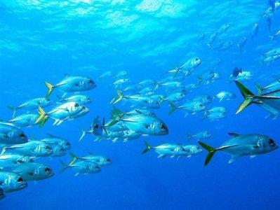 Allarme Oceani: Marevivo chiede un G20 per il mare
