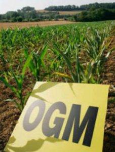 Il Parlamento Ue rafforza la resistenza agli Ogm