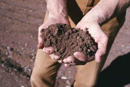 Istat: in dieci anni abbandonati 300mila ettari di suolo agricolo