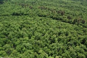 Pubblicità ingannevole, associazioni contro il greenwashing di APP