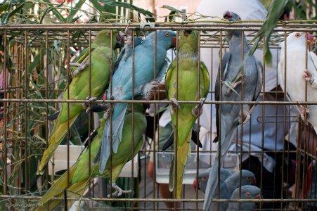 Sacile, in tanti a manifestare contro la fiera ornitologica venatoria