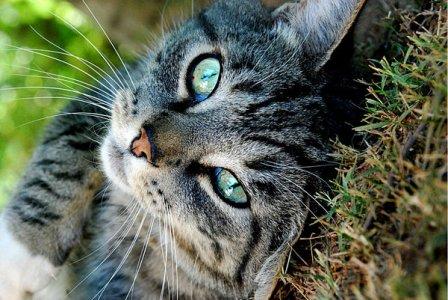 Svizzera: ancora legittima la caccia ai gatti randagi
