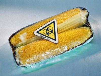 Friuli: sequestro di mais OGM. La legge comincia a funzionare