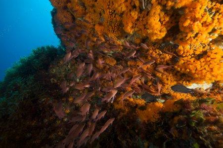 Greenpeace: la corsa all'oro nero minaccia i tesori del Canale di Sicilia