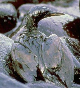 Golfo del Messico: sospensione anticipata per moratoria sulle trivellazioni