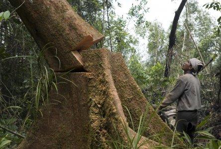 Alberi dal Sud del mondo per le centrali a biomassa del Nord