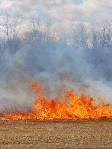 Legambiente: nel 2011 incendi in aumento del 66 per cento