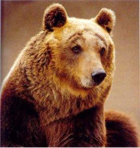Caccia, in Abruzzo si rischia di far male all'orso