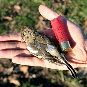Sparare ovunque tutto l'anno, un emendamento per la 'caccia libera'