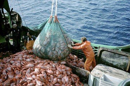 Pesca: dall'Unione europea una proposta di regolamento