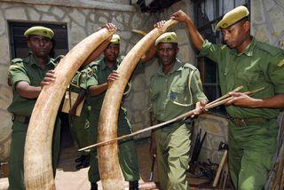 Elefanti e rinoceronti nel mirino dei bracconieri