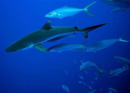 Greenpeace presenta un piano di emergenza per salvare gli oceani