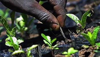Sovranità alimentare: l'accesso alla terra per combattere la fame