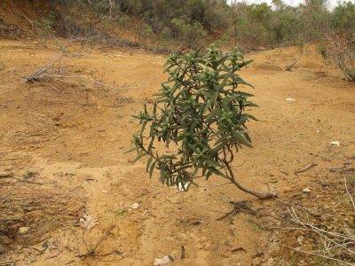 Desertificazione: anche in Italia suoli fertili a rischio degrado
