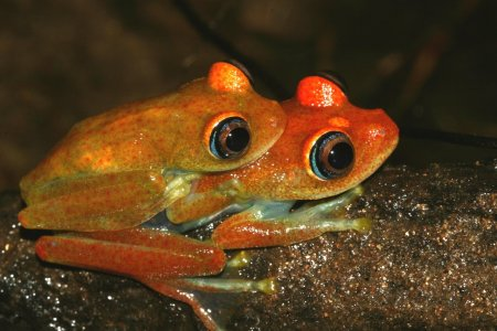 Biodiversamente: musei e oasi WWF aperti per il Festival dell'Ecoscienza