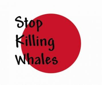 Anti-whaling Day. Il 5 novembre a Roma  sit-in per fermare la caccia alle balene