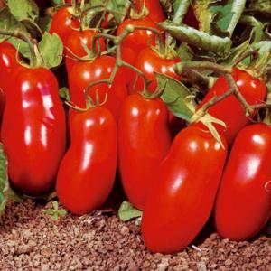 Sicurezza alimentare: più controlli e meno falsari del cibo
